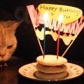 猫ちゃん2歳の誕生日!手作りケーキでお祝い♡