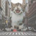 街に巨大猫出現!?話題のアート「猫ゴジラ」とは?