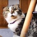 短足猫くんの午前中の過ごし方を観察!