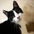 猫同士のコミュニケーション3つ!鳴くのは人間にだけ?