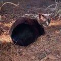 墓地でボロボロの老猫を保護……野良暮らしの危険性とは?