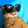 猫も日焼けをする?紫外線対策した方が良い猫種や対策の方法
