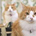 どうやって見分ける?似てる猫種4つ