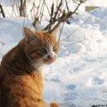 野良猫は冬をどう乗り超える?