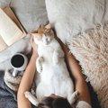 猫からの第一印象を良くするための6つのコツ