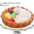フルーツタルトの具になっちゃう猫のベッドがかわいい!