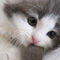 小さな命を守る為、決死の覚悟を決めた母猫のお話