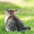 猫がピクピクする理由6つ 起きてる時、寝てる時の違い