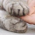 猫の爪が出たままになるのはどうして?考えられる病気とは…