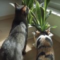 引越し作業に悪戦苦闘する飼い主さんとマイペースな猫さんたち♡