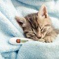 猫の『健康チェック法』5つ!自宅でできる簡単な方法を解説