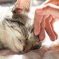 人を助けた猫の話に思わず涙がじんわり…猫ってこんなにも温かい!!
