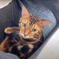 おちつく♪カンガルースタイルで抱っこしてもらう猫さんたち♡
