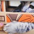 隙間から狙う猫ちゃんの可愛いあんよがたまらない♡