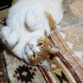 猫が安心して眠っている時の寝相5選