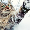 猫の毛ぶきが悪い…ふさふさにしてあげたい時の対処法