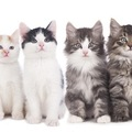 猫の毛色や柄による性格の違い
