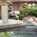 猫が流れるお水を好む3つの理由