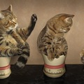 猫の成長期の育て方~体重の変化や餌の与え方~