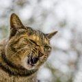 猫がイライラしている時の仕草5つとストレス解消法