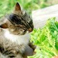 猫に人参を与えても大丈夫!食べさせるときの注意点