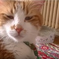 目つきが悪いと言われて目を見開く猫♡