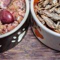 猫の手作りご飯に適している食材は肉?それとも魚?