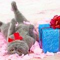 愛猫のお誕生日は何をしてお祝いする?いつもと違う事でお祝いを!