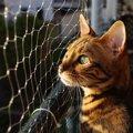 ベンガル猫の寿命はどのくらい?平均年齢や長生きしてもらうためにで…