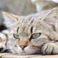 猫に嫌われる人の特徴や行動、仲直りの方法