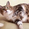猫が肥満になる理由と対策