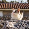 猫から見える世界ってどんな世界?