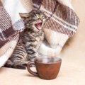 猫が早朝に『大きな声で鳴く』6つの理由