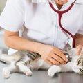 猫の回虫症の症状や治療の方法、感染経路や予防法
