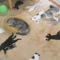 【話題】どれが本物?猫柄の絨毯に柄を増やす天才飼い主現る!