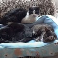 ジロッ…睨まれた猫ちゃんが寝る場所に選んだのはここでした