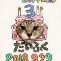 愛猫の誕生日にいかが?猫のバースデイ顔ハメを作ってみた!