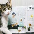雑誌an・anの猫特集「にゃんこLOVE」の内容と購入方法