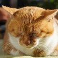 可愛い猫のごめん寝♪でも実は、要注意!!