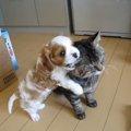 大好きが止まらないワンコと優しく受け入れる猫さん♪