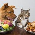 猫が口で「クチャクチャ」ご飯を食べる理由