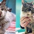 交通事故で傷ついた野良猫…愛溢れる家族の一員に!