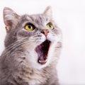 猫がよく鳴くときの理由