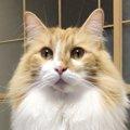 職場に連れて行ってる愛猫の意外な本音|Laylaのペットリーディング