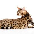 珍しい猫種12選