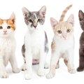 子猫の値段っていくら?人気猫種10種類の平均価格と個体差