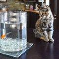 猫と金魚を同居させる時の5つの注意点