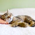 猫は実はあまり熟睡していなかった!?睡眠について解説!