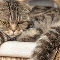 猫に苦痛を与える飼い主の『やりすぎ行動』5つ