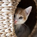 むやみに猫を叱るとどうなるの?